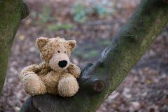 Björn som är borttappad i träna Arkivbild