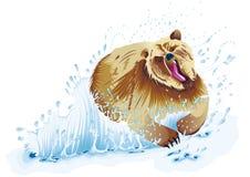 Björn som kör i vatten Arkivfoton