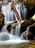 Björn vattenfall Arkivbild