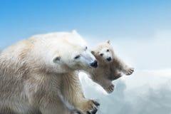 björnar Arkivfoto