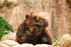 björnar som leker två Arkivbilder