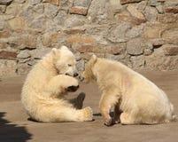 björnar två barn Royaltyfri Fotografi
