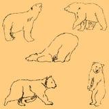 Björnarna Skissa vid handen Blyertspennateckning vid handen blå vektor för sky för oklarhetsbildregnbåge Bilden är tunna linjer T Arkivfoton