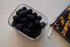 Björnbär på ett köksbord Fotografering för Bildbyråer
