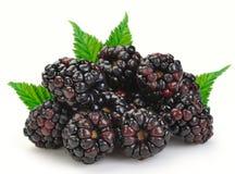 björnbärdewberries royaltyfri foto