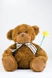 björnblomma som håller nalle Royaltyfri Fotografi