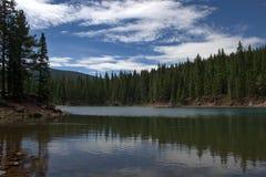 björncolorado lake Arkivbild