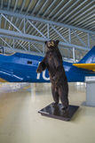 Björnen Arkivbilder