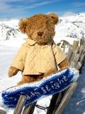 Björn på snowborden Fotografering för Bildbyråer