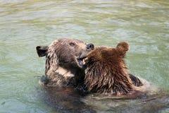 björnen uthärdar bern den bruna parken switzerland två Arkivfoto