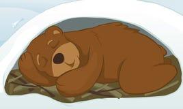 björnhåla Royaltyfria Bilder