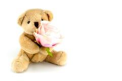 Björnhåll en rosa färgros för en årsdag eller en valentinberöm Arkivfoto