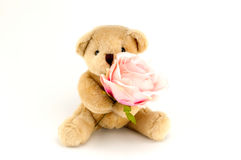Björnhåll en rosa färgros för en årsdag eller en valentinberöm Arkivfoton