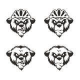 Björnhuvud Logo Mascot Emblem Fotografering för Bildbyråer