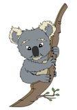 björnkoala arkivfoto