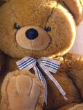 björnnalle Royaltyfri Fotografi
