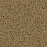 Björnpäls Arkivfoton