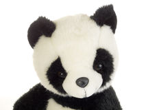 björnpanda royaltyfri foto