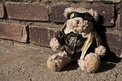 björnpilot Fotografering för Bildbyråer