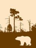 björnsilhouette Royaltyfri Fotografi