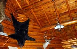Björnskinn på träväggen i det montana hemmet Royaltyfria Foton