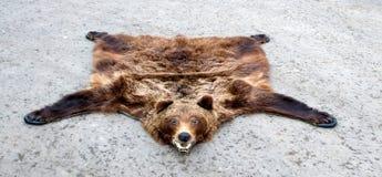 björntrofé Fotografering för Bildbyråer
