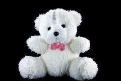 björnwhite Royaltyfri Fotografi