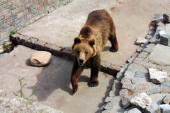 björnzoo arkivbild