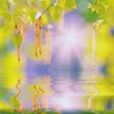 Björkfilial reflekterad i water_4 Arkivbild