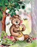 björnen äter honung Royaltyfri Bild