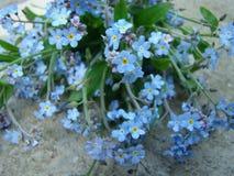 błękitne kwiaty Fotografia Royalty Free