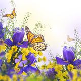 Błękitni irysy z żółtymi stokrotkami Zdjęcia Royalty Free