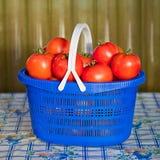 Błękitny kosz z dojrzałymi pomidorami Zdjęcie Royalty Free