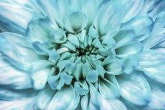 Błękitny kwiat Zdjęcie Royalty Free