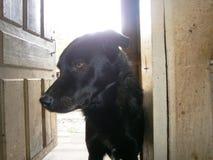 Blâmez le chien photos libres de droits