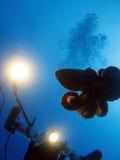 bläckfisk 108 Arkivbilder