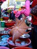bläckfisk Arkivbild