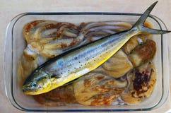 bläckfisk för fisk för bläckfiskdelfindorado arkivfoton