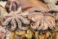 Bläckfisk som är till salu i den grekiska fiskmarknaden arkivfoton