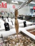Bläckfisk som klämmer fast upp från magasinet Royaltyfri Fotografi
