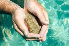 bläckfisken finner händer mitt skydd Arkivfoton