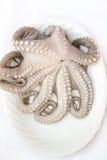 bläckfiskplatta Royaltyfri Foto