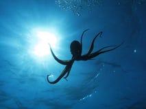 bläckfisksun Royaltyfria Foton