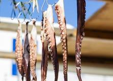 Bläckfisktentakel som torkar i solen Royaltyfri Fotografi