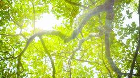 Bländande sol till och med trädsidor lager videofilmer