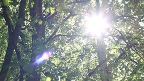 Bländande solsken till och med markisen stock video