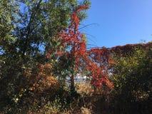 Blätter ändern zu den schönen Fallfarben Stockbild