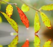 Blätter über See Stockfotografie