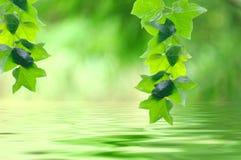 Blätter über Wasser im Park Stockbilder