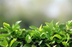 Blätter Stockfotografie